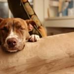 Bright Mind Update: One Happy Dog